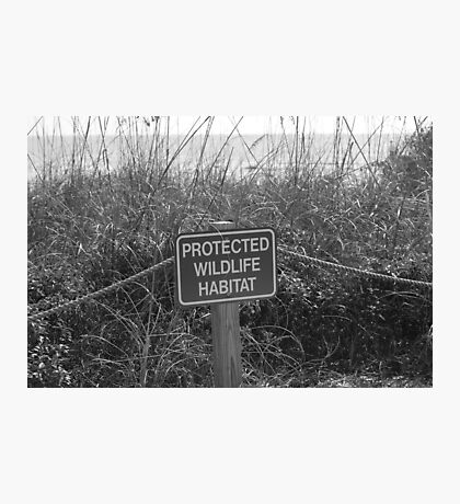 Protected Photographic Print
