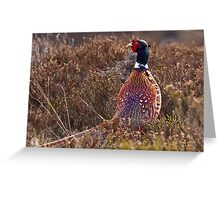 Pheasant watching between heather in Scottish Uplands Greeting Card