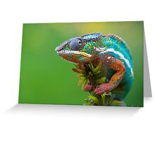 Panther chameleon outside Greeting Card