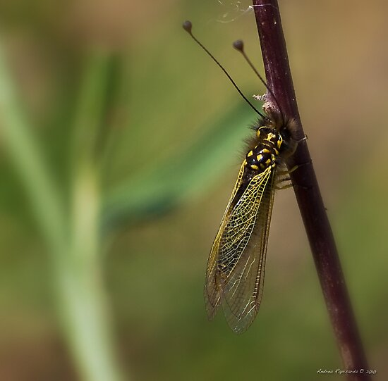 A strange  bug  by Andrea Rapisarda