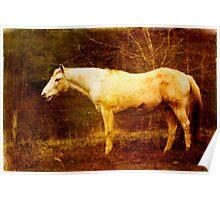 Vieja Horse Poster