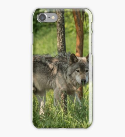 Timber wolf in summer iPhone Case/Skin