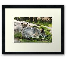 Timber wolf and pup Framed Print