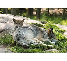 Timber wolf and pup Photographic Print