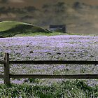 Lavender Dream by Brian Gaynor