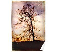 Vieja Tree Poster