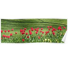 Red Tulip Parade in Chelmsford Poster