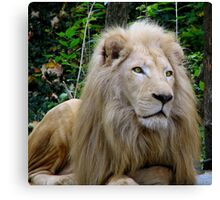 Eyes of a Hunter - White Lion Canvas Print