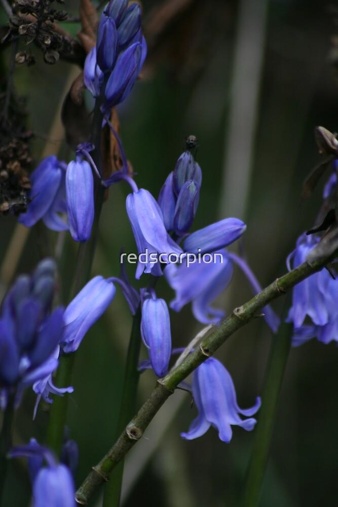 Blue Bells by redscorpion