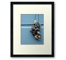 Shells, Leiden Framed Print