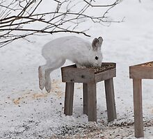 Its a Leap Year!!  Ottawa, ON by Tracey  Dryka