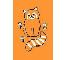 Red Panda with White Flowers Photographic Print