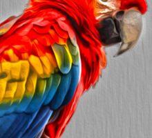 Scarlet Macaw Sticker