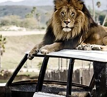 Lion on a Jeep by Benjamin Vess