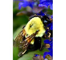 Happy To Bee Me Photographic Print
