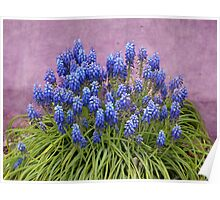 Spring in Blue and Purple Poster