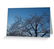 Ice Storm 2013 - Brilliant, Icy Blue Tree Branches Greeting Card