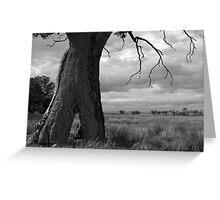 Scary Tree - Wilmington Paddock Greeting Card