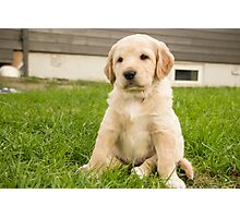 Puppy Photographic Print