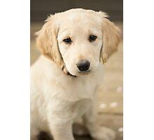 Puppyface Photographic Print