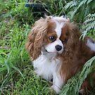 one cute little chap by BronReid