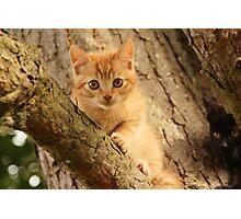 Mini cat Photographic Print