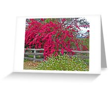 Bougainvillea and Daisies Greeting Card