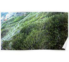 Hills at Shoreline Park 1061 Poster
