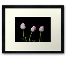 Three Framed Print