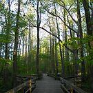 Boardwalk Through the Bog by Jaclyn Hughes