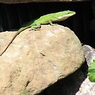 Green Anole Lizard  by JeffeeArt4u
