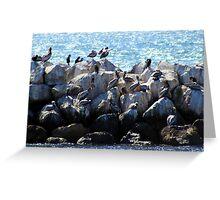 Pelican Neighborhood 1136 Greeting Card