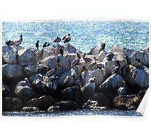 Pelican Neighborhood 1136 Poster