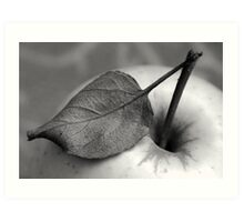 The leaf dried out Art Print