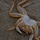 Crab by Smarsh