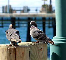 Pigeons 1148 by eruthart
