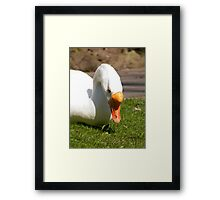 Goosey 3 Framed Print