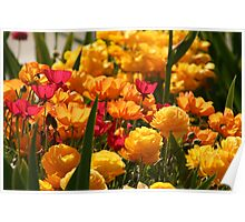 Bright Colours in the Garden Poster