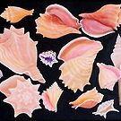 SeaShell Quartet by JANET SUMMERS