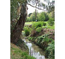 Park Stream Photographic Print