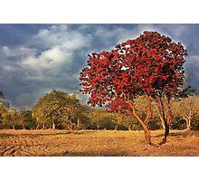 Red tree Photographic Print