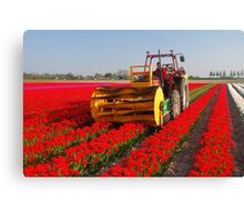 The end of the tulip season..... Canvas Print