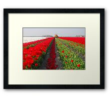 The end of the tulip season.....3 Framed Print
