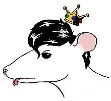 Stray Rat Photographic Print