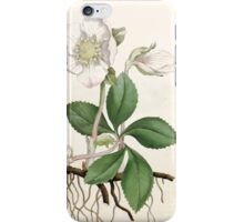 The Botanical magazine, or, Flower garden displayed by William Curtis V1 V2 1787 1789 0021 Helleborus Niger, Black Hellbore or Christmas Rose iPhone Case/Skin
