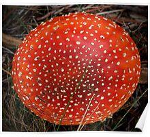 Fungingulus Poster