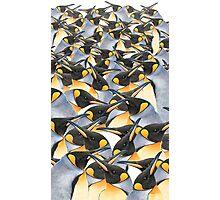 King penguin mob Photographic Print