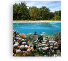 Tropical sandy beach and underwater coral reef fish Canvas Print