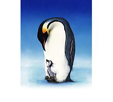 Emperor penguin with chick Photographic Print