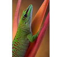 Day gecko close up Photographic Print